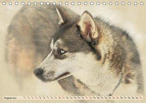 Schlittenhunde 2019 (Tischkalender 2019 DIN A5 quer)