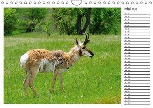 Tiere der Great Plains (Wandkalender 2019 DIN A4 quer)