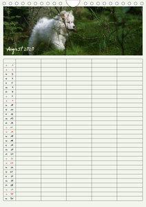 Kleine Samojeden (Wandkalender 2020 DIN A4 hoch)