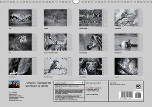Afrikas Tierwelt in schwarz & weiß