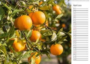 Emotionale Momente: Orangen und Zitronen.