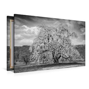 Premium Textil-Leinwand 120 cm x 80 cm quer Baumwunder