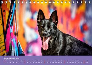 Hunde und Graffiti
