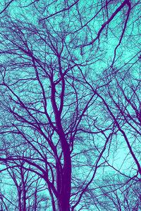Premium Textil-Leinwand 60 cm x 90 cm hoch Winterbaum