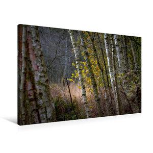 Premium Textil-Leinwand 90 cm x 60 cm quer Pennigbüttler Moor -