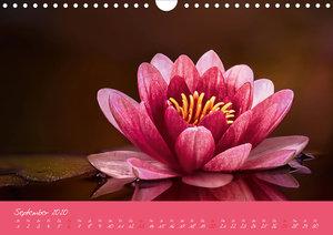 Faszination Blütenwelt (Wandkalender 2020 DIN A4 quer)