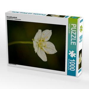 Sumpfherzblatt 1000 Teile Puzzle hoch