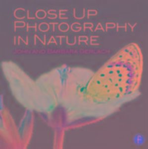 Close Up Photography in Nature
