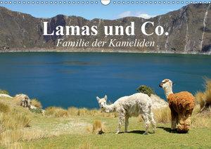Lamas und Co. Familie der Kameliden (Wandkalender 2019 DIN A3 qu