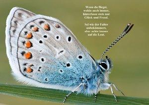Schmetterlinge & Gedichte (Posterbuch DIN A3 quer)
