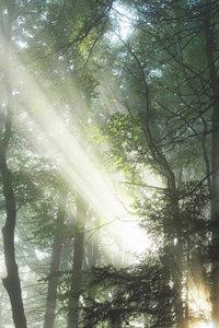 Premium Textil-Leinwand 30 cm x 45 cm hoch Zauberhafte Lichtspie