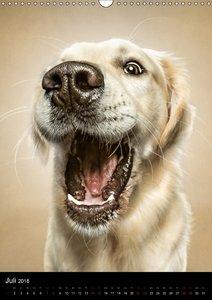 Funny Faces - Lustige Hundebilder