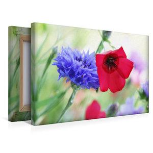 Premium Textil-Leinwand 45 cm x 30 cm quer Kornblume und Roter L