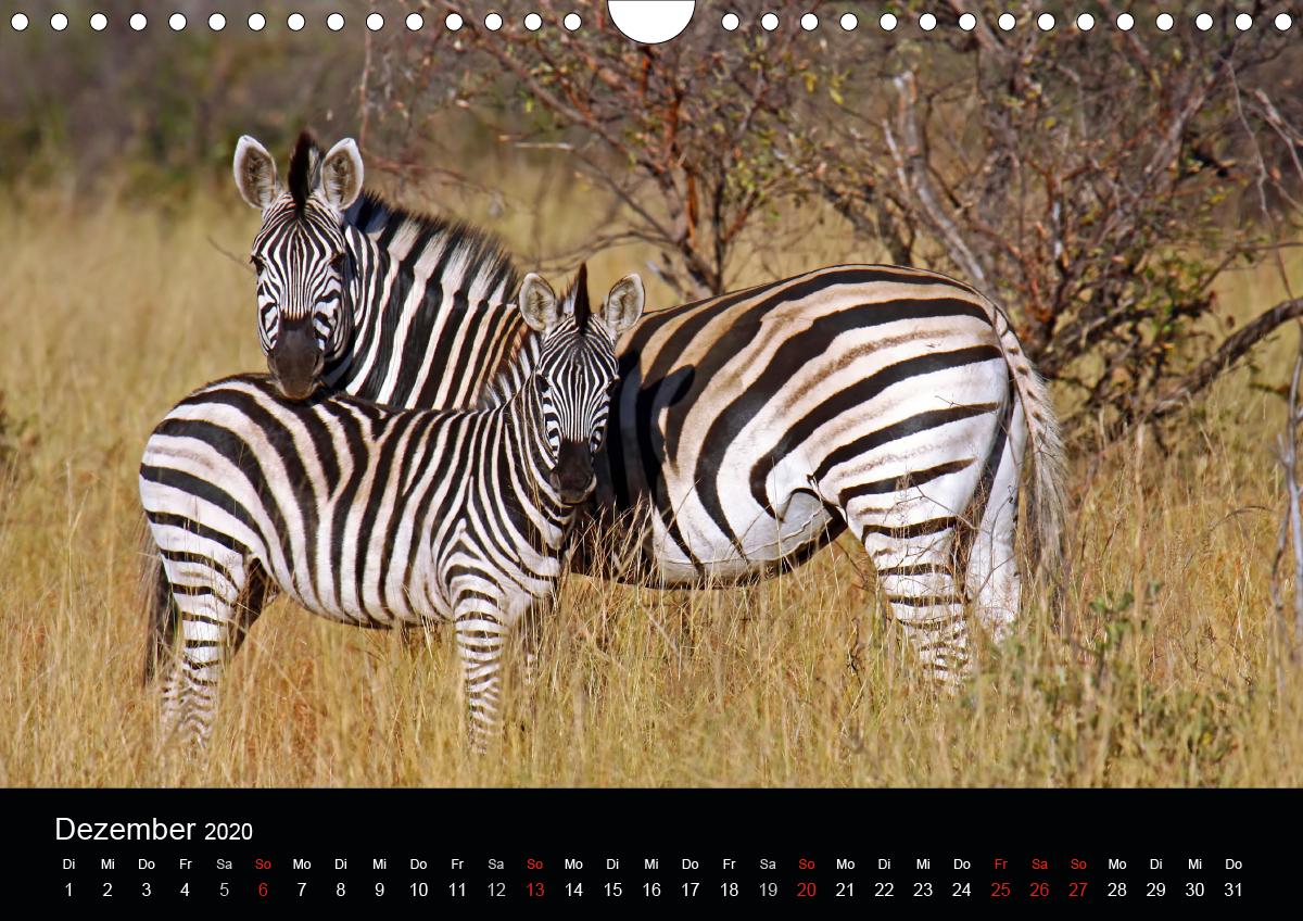AFRIKAS TIERISCHE DUOS - zum Schließen ins Bild klicken