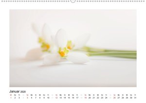 Weißer Blütenzauber