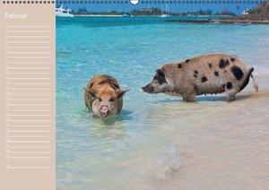 Schwimmende Schweine / Geburtstagskalender (Wandkalender immerwä