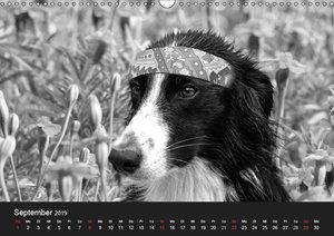 Hütehunde (Wandkalender 2019 DIN A3 quer)