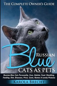 Russian Blue Cats as Pets. Personality, Care, Habitat, Feeding,