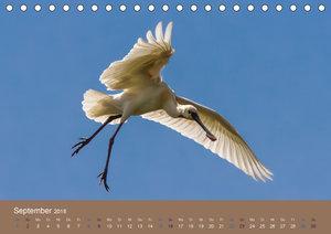 Vogelflug-Faszination (Tischkalender 2018 DIN A5 quer)