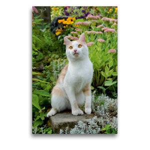 Premium Textil-Leinwand 50 cm x 75 cm hoch Aufmerksame Katze im