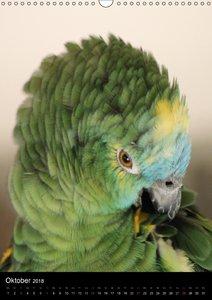 Mit Papageien farbenfroh durchs Jahr
