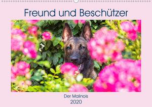 Freund und Beschützer - Der Malinois