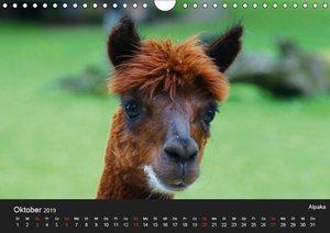 Tiere auf dem Bauernhof (Wandkalender 2019 DIN A4 quer)