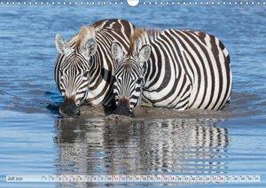 Emotionale Momente: Die besten Zebrafotos von Ingo Gerlach (Wand