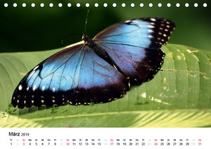 Costa Rica - Die Farben der Natur (Tischkalender 2019 DIN A5 que
