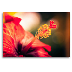 Premium Textil-Leinwand 120 cm x 80 cm quer Hibiskus-Blüte, rot