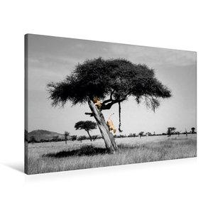 Premium Textil-Leinwand 90 cm x 60 cm quer Colorkey FineArt: Zwe