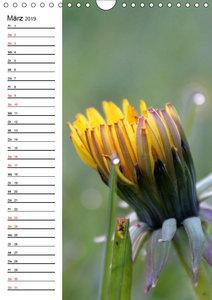Der Löwenzahn / Geburtstagskalender (Wandkalender 2019 DIN A4 ho