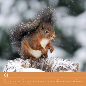 Der Eichhörnchenkalender 2018