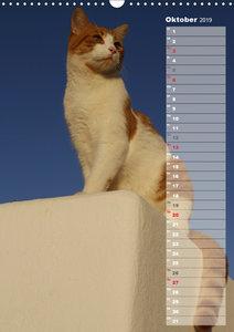Hauskatzen (Wandkalender 2019 DIN A3 hoch)