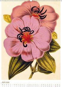 Blüten: Zeichnungen und Stiche aus dem 19. Jahrhundert