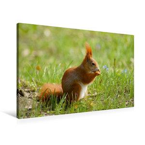 Premium Textil-Leinwand 90 cm x 60 cm quer Süßes Eichhörnchen in