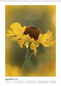 Gelber Blütentraum (Wandkalender 2020 DIN A3 hoch)