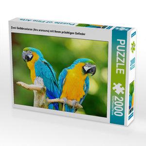 CALVENDO Puzzle Papageien: Zwei bunte Exoten im Porträt 2000 Tei
