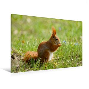 Premium Textil-Leinwand 120 cm x 80 cm quer Süßes Eichhörnchen i