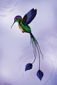 Premium Textil-Leinwand 80 cm x 120 cm hoch Kolibri
