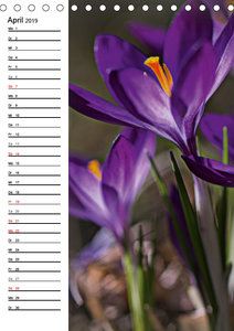 Lichtfänger (Tischkalender 2019 DIN A5 hoch)