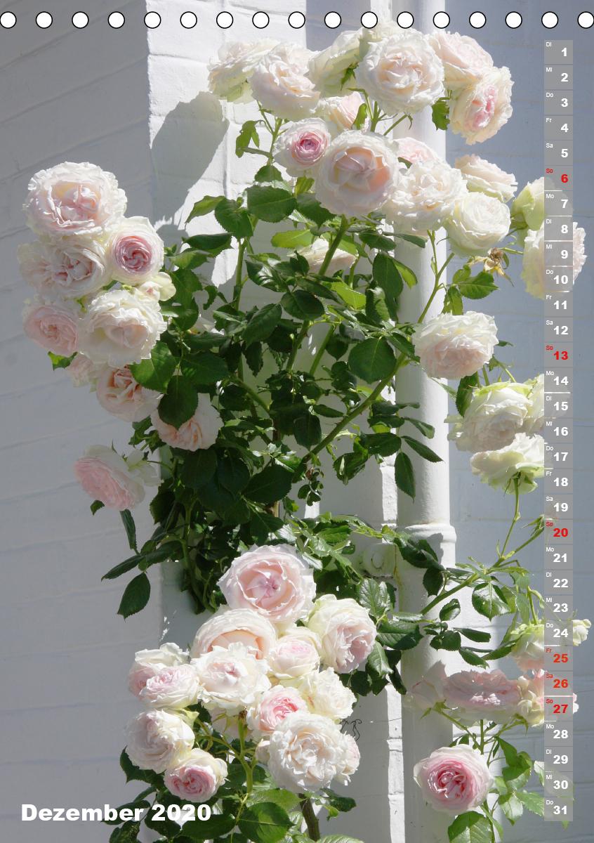 Schönste Rosen - zum Schließen ins Bild klicken