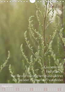 Unkräuter - Nützliche Wildpflanzen auf der Wiese
