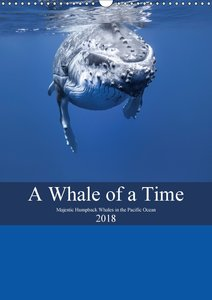 A Whale Of A Time (Wall Calendar 2018 DIN A3 Portrait)