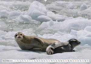 Alaskas Tierwelt - Artenvielfalt im hohen Norden (Wandkalender 2