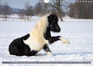 Ponys, die starken Persönlichkeiten
