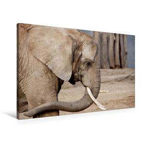 Premium Textil-Leinwand 90 cm x 60 cm quer Afrikanischer Elefant