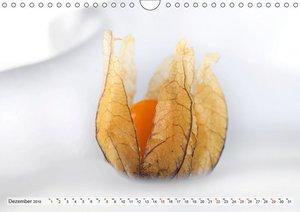 Süße Früchtchen - Vitamine pur (Wandkalender 2019 DIN A4 quer)