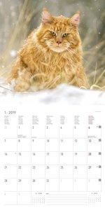 Katzen 2019 - Broschürenkalender