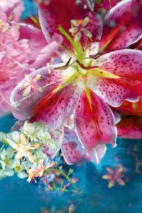 Premium Textil-Leinwand 60 cm x 90 cm hoch Lilie Im Garten